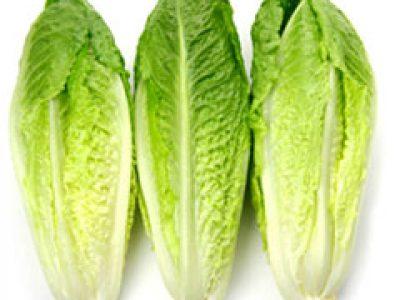Romaine-Lettuce2