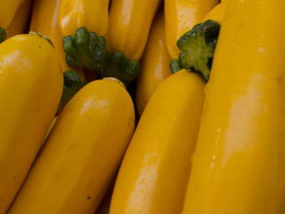 Zucchini Yellow1
